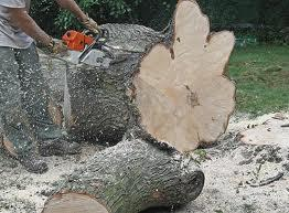 Emergency Tree Service   - 22879
