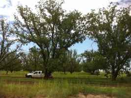 Home & Former Pecan Orchard