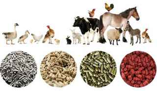 SUCCESSFUL Custom Animal Feeds Distribution Corp.
