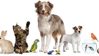 Truly turnkey website selling pet supplies HIGH $
