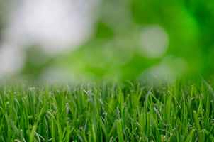 Lawn and Landscape – Seller Financing Option