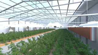 Seeking Investors for Turn-Key Cannabis Grow