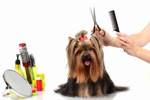Established Dog Grooming Business  - 29179