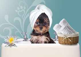 Charming Pet Grooming Salon