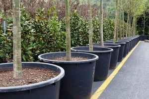 Money Grows On This Tree Farm & Nursery!