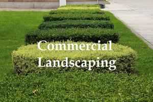 Landscaping with 50+ Commercial Accounts