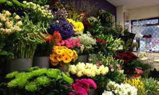 Floral & Gift Shop - Well Established &Profitable