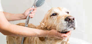 doggy-daycare-boarding-and-grooming-alexandria-virginia