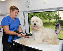 Growing Mobile Pet Grooming Franchise with 2 Vans!