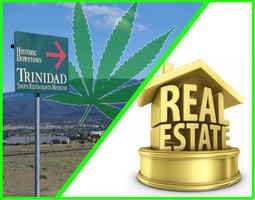 Trinidad Dispensary Optional Real Estate Included