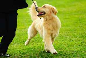 Profitable Dog Training Business