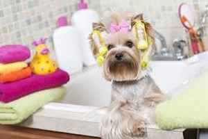 Turn Key Pet Spa & Daycare!!!!