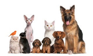Dropship online pet supply store for sale