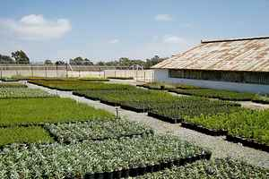 Established Wholesale Plant Provider