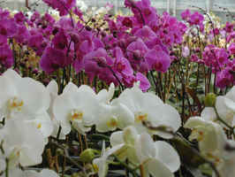 wholesale-tropical-plant-business-florida