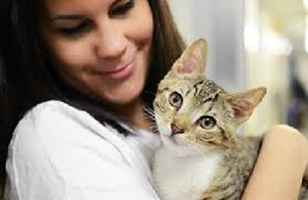 cat-sitting-care-service-california