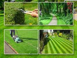 Established Lawn Care Business- Price Reduced!