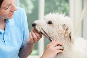 tampa-bay-area-mobile-pet-grooming-service-tampa-bay--florida