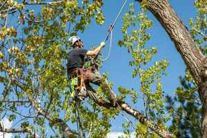 tree-service-california