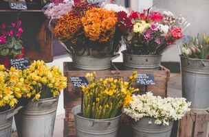 Profitable Floral Store in Mercer County-26702