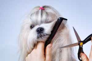 pet-grooming-and-supplies-south-carolina