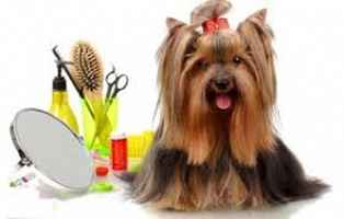 pet-grooming-salon-texas