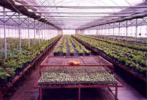 horticultural-and-grown-supplies-loveland-colorado