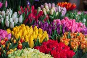 Established Flowershop in Putnam County, NY  31250