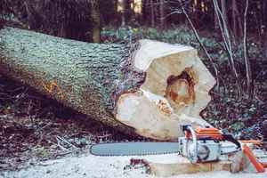 Tree Services Business Toledo, OH