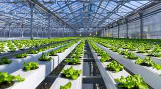 top-quality-hydroponic-products-retailer-and-s-pinellas-county-florida