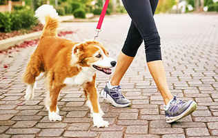 Established & Reputable Dog Walking Business