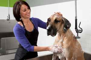 boutique-pet-grooming-salon-spa-gaithersburg-maryland