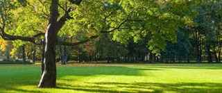 tree-and-lawn-care-new-york