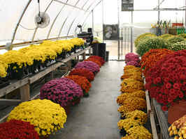 Profitable Retail Garden Center