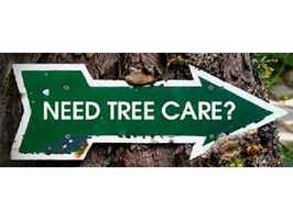 The Best Tree Cutting and Tree Services Company