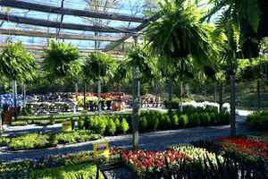 wholesale-and-retail-garden-center-and-nursery-florida