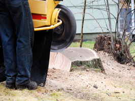 Tree Service and Stump Removal Company