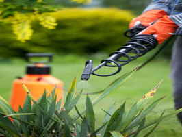 Rochester MN Based Lawn Service