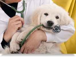 Profitable, AAHA Designated Animal Hospital w/ RE