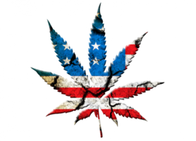 Recreational Marijuana Retail License