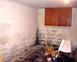 Water Proofing and Mold Remediation  - 31018