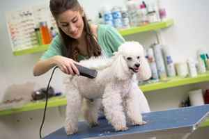 pet-spa-california