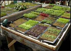 Hydroponic Gardening and Plant Supply Store