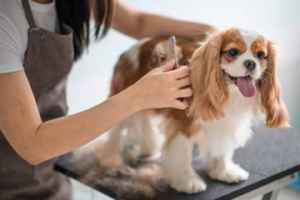 pet-grooming-salon-in-great-stanislaus-county-california