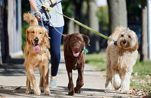 Established/Well-Known Dog Walking & Pet Care Biz!