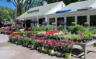 Thriving Country Store & More in Beautiful Setting