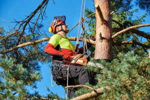 long-island-tree-service-new-york