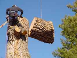 Full Service Tree Care Business
