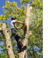 Tree Service Business- Excellent Reputation!