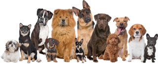Profitable, Efficient Pet Supply Webstore For Sale